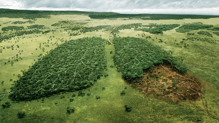 Amazon rainforest Lungs of the Planet