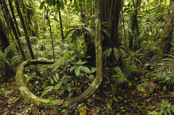 amazon forest floor