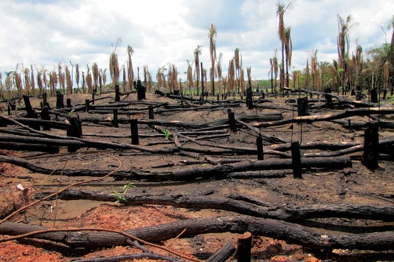 fight deforestation in the Amazon